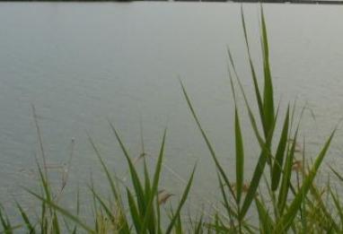 Orlando pond
