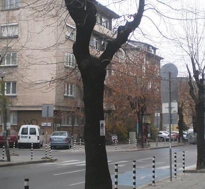 Oborishte Street